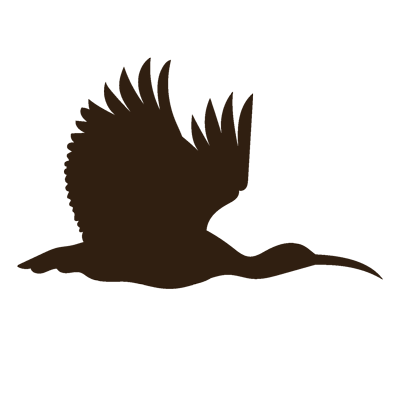 Giant Ibis Cambodia
