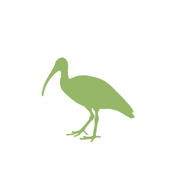 Giant IBIS Icon